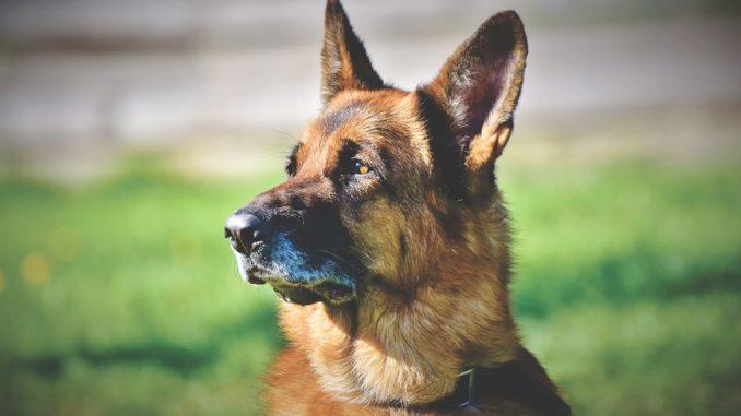 Heilerde fuer Hunde helfen bei Beschwerden