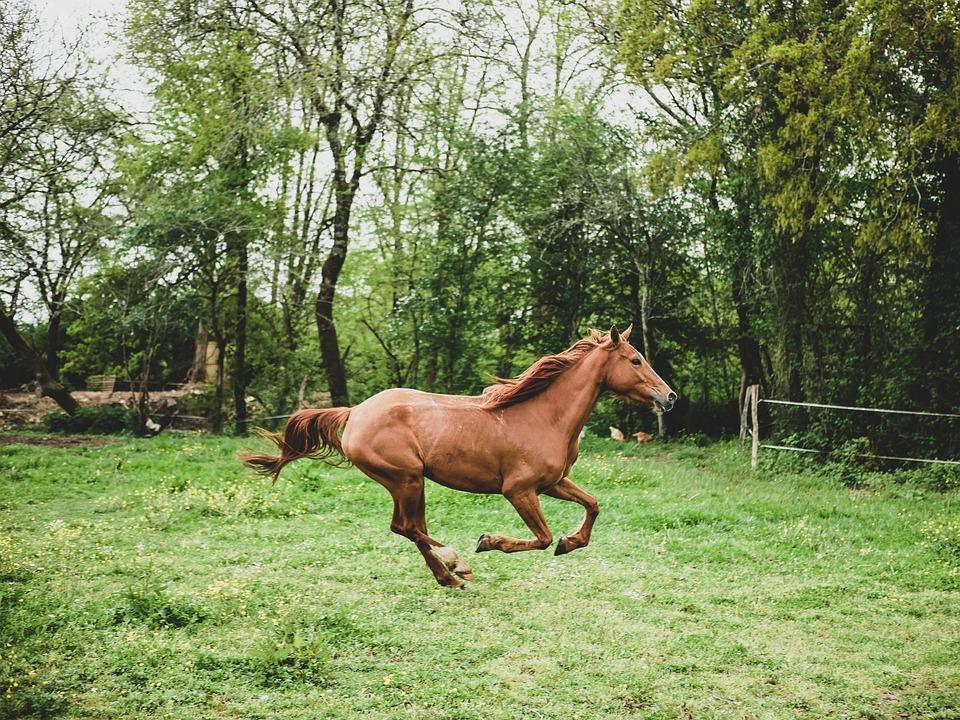 pferd-tritt-aus