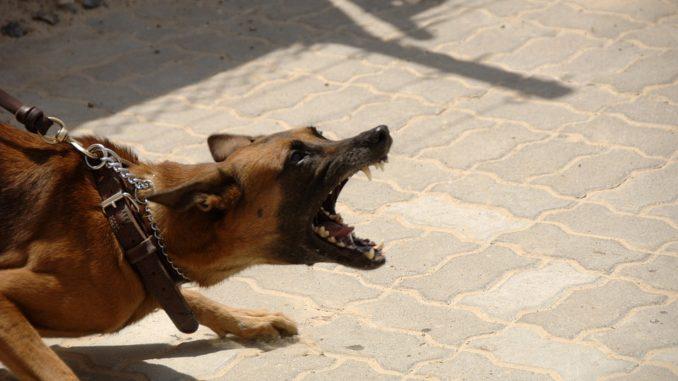 hund- bellen-stoppen