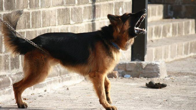 hund-bellt-staendig