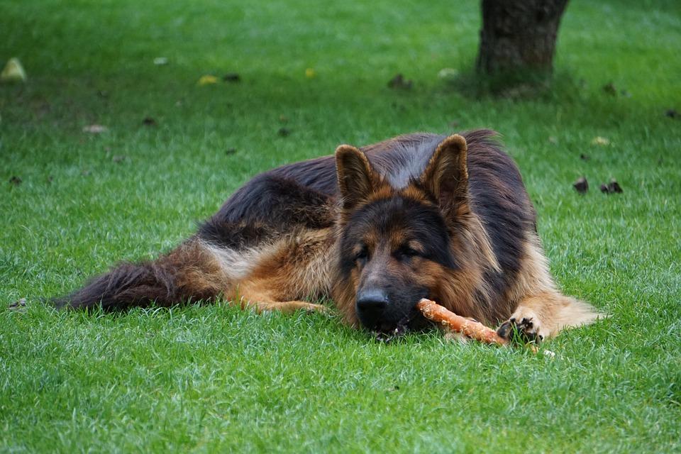 hund-nudeln-essen