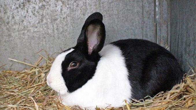 Kaninchenkäfig doppelstöckig