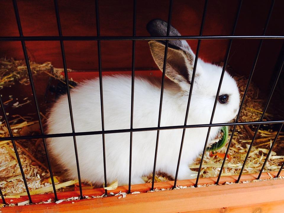 Kaninchenkäfig 160 cm