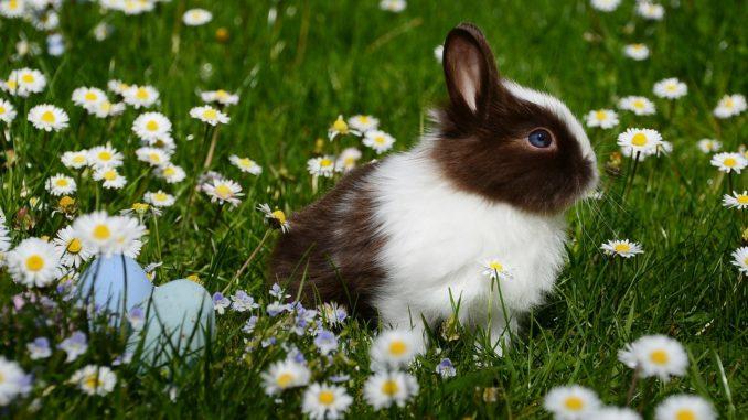 Kaninchenstall für 2 Kaninchen