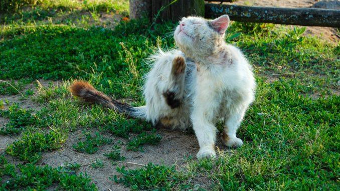 Floehe und andere schaedlinge bei Katzen