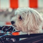 Gefederter Hundeanhänger