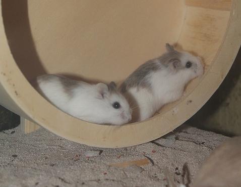 hamster-laufrad-tipps-und-kaufempfehlungen
