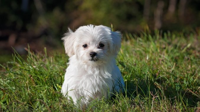 Süßer Hund auf Wiese