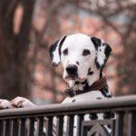 Hunde am Zaun