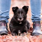 Hund mit Hundeschutzhose
