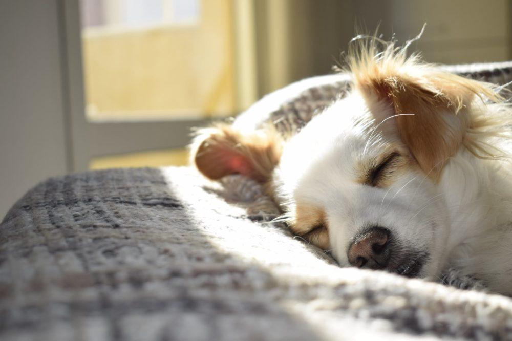 kuehlmatte-fuer-hunde