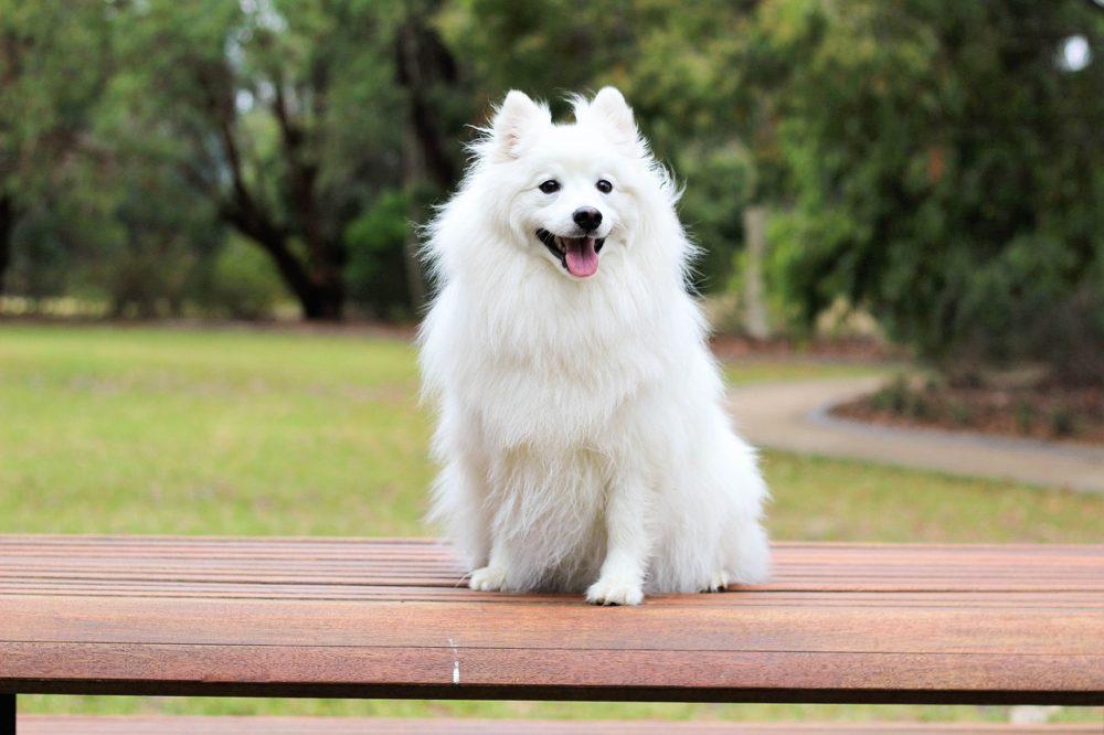 der-boo-hund