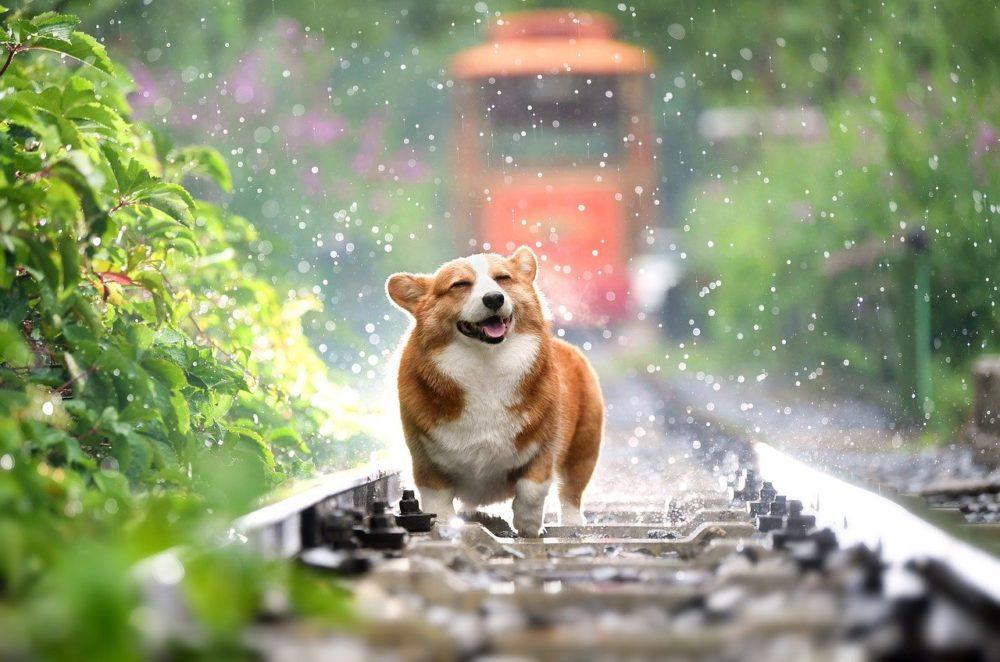 hunde-artgerecht-ernaehren
