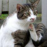 Katzen-Kratzschutzfolie