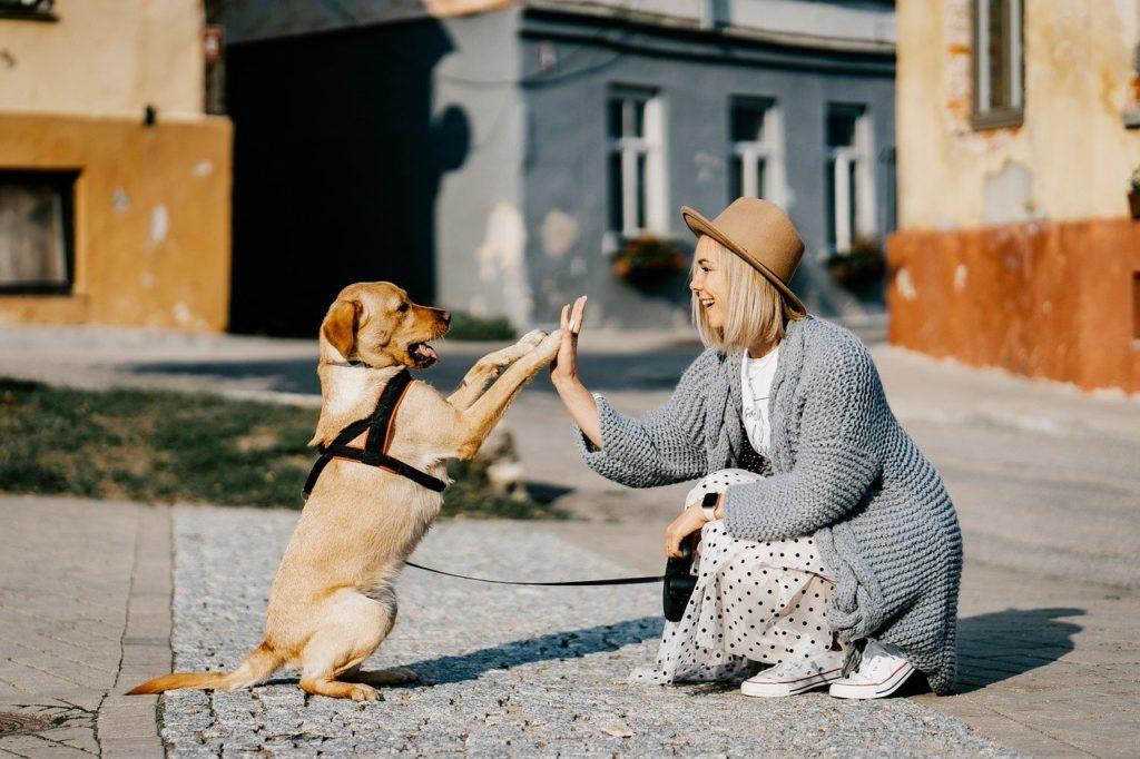 hundehaftpflichtversicherung